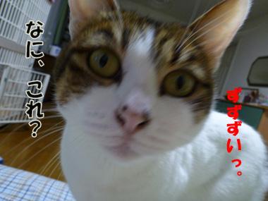 2012_01280057.jpg