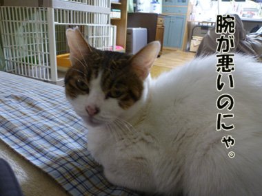 2012_01290047.jpg