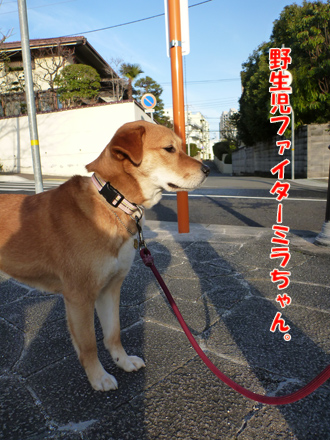 2012_02290026.jpg