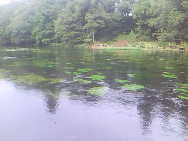 柿田川_4