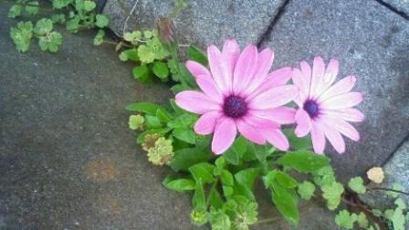 flower0009
