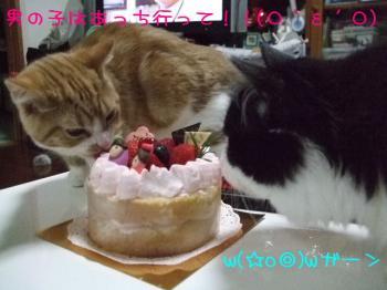 2008_03010027.jpg