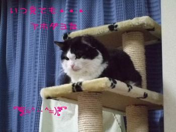 2008_03040039.jpg
