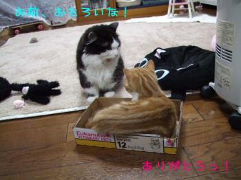 2008_03040044.jpg