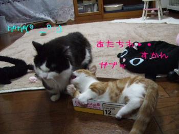 2008_03040057.jpg