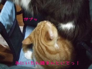 2008_03090018.jpg