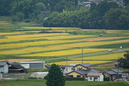 農村景観-8