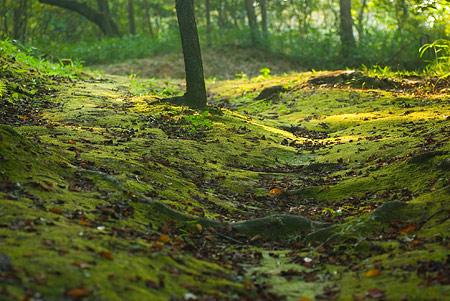 森林公園1-13
