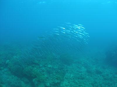 本島沿いボートダイビング