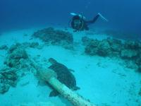 沖縄ダイビング
