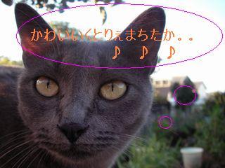 20070918102407.jpg