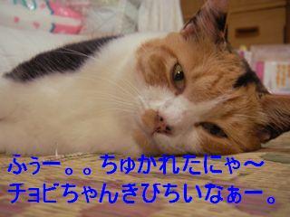 20070922210746.jpg