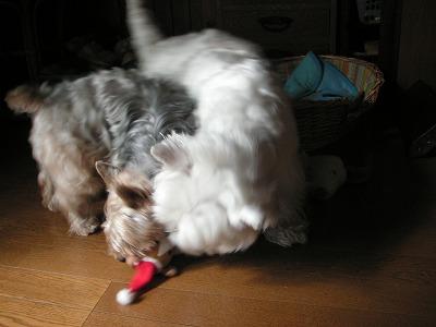 玩具争奪戦!