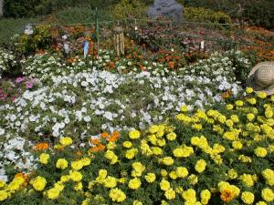 長居公園の花壇
