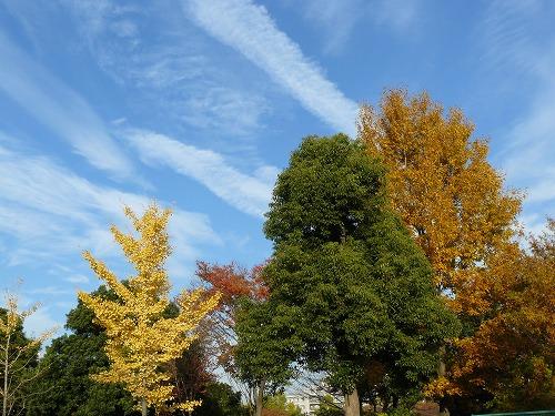 青空に紅葉・黄葉が綺麗~
