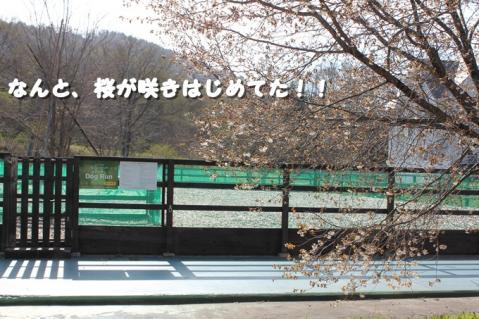 271_20110530013105.jpg