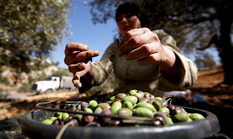 Palestinian-olives-for-ol-001[1]