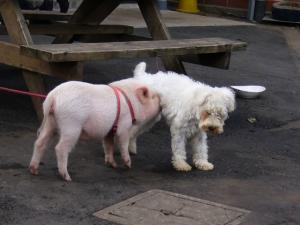 子ブタがいました。肌触りは固い感じで…犬のようにしっぽ振ってました。2人は仲良しみたいです。^^