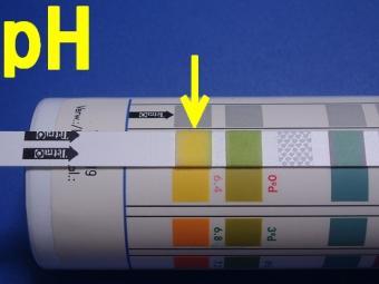 pH_20091108.jpg