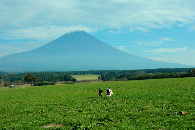 まめ茶in富士山