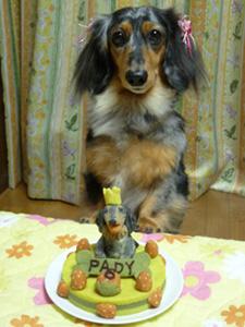 パディ6歳