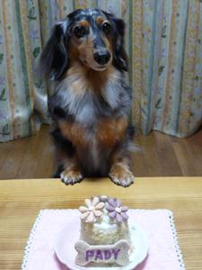 ケーキ4P1060570