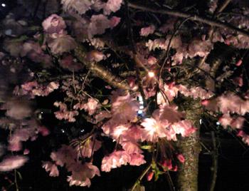 夜桜4/9SBSH0003