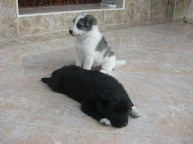 キンタとマーニ