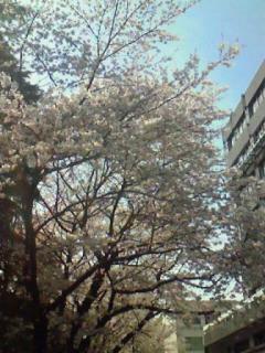 0407桜