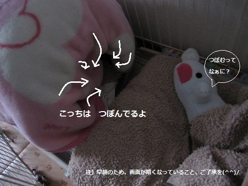 029-2_20120314184443.jpg