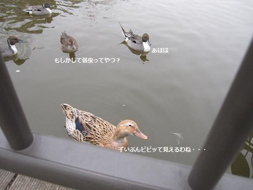 086-2_20120219190932.jpg