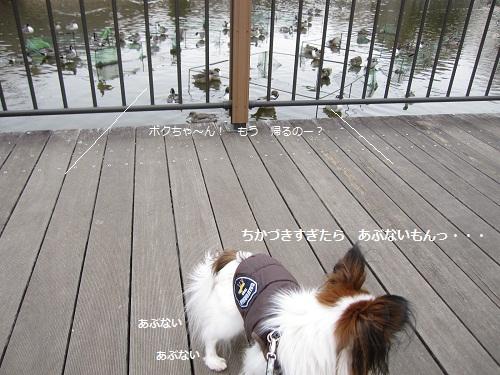 106-2_20120219191051.jpg