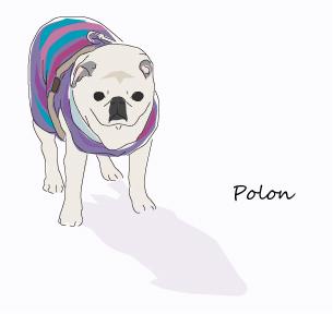 polonp.jpg