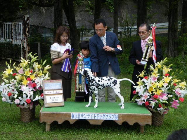 東京サマーランドドッグショー+054_convert_20110310170422