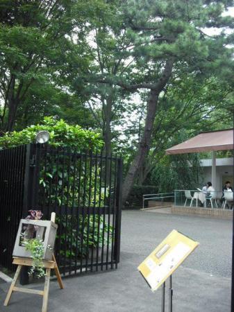 緑に囲まれたカフェ.JPG