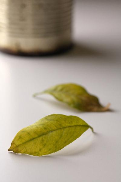 lemon_1.jpg