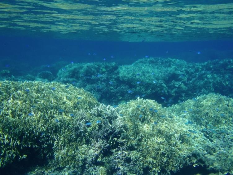 阿嘉ビーチ 水中