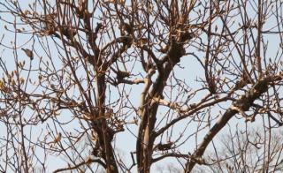 小鳥たち2