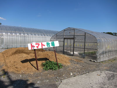 1103トマト牧場