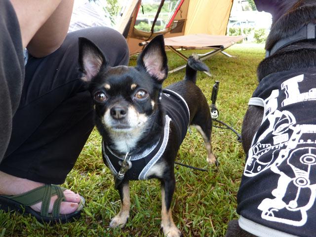 2009 09 13 nagiso (24)