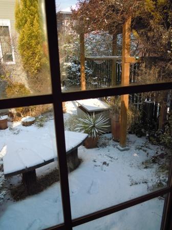 my-garden 047