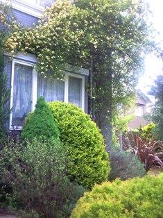 my-garden 019 (2)