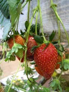 my-garden 097