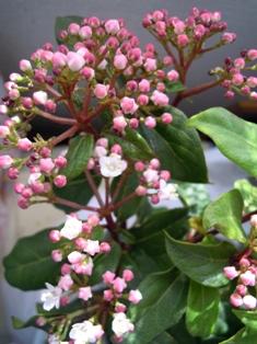 my-garden 088 (2)