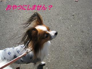 IMG_1267.jpg