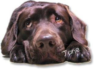 愛犬ジェーン
