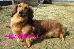 2011-02-02_3563sakura2.jpg