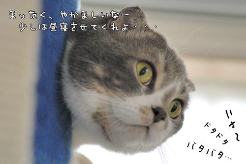 20071117_a