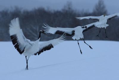 crane502