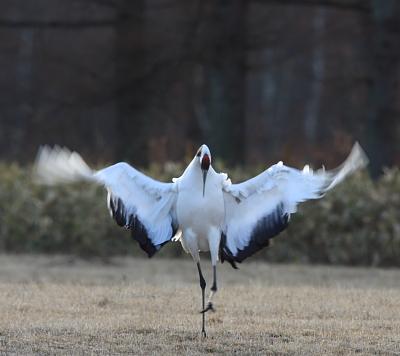 crane505